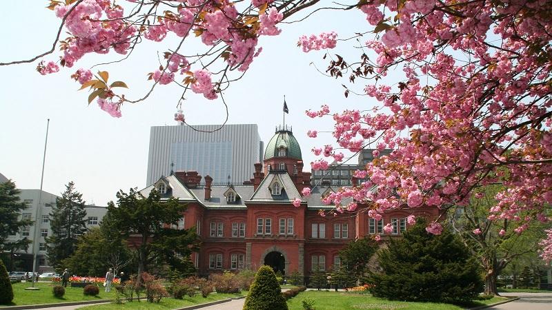 北海道庁の桜